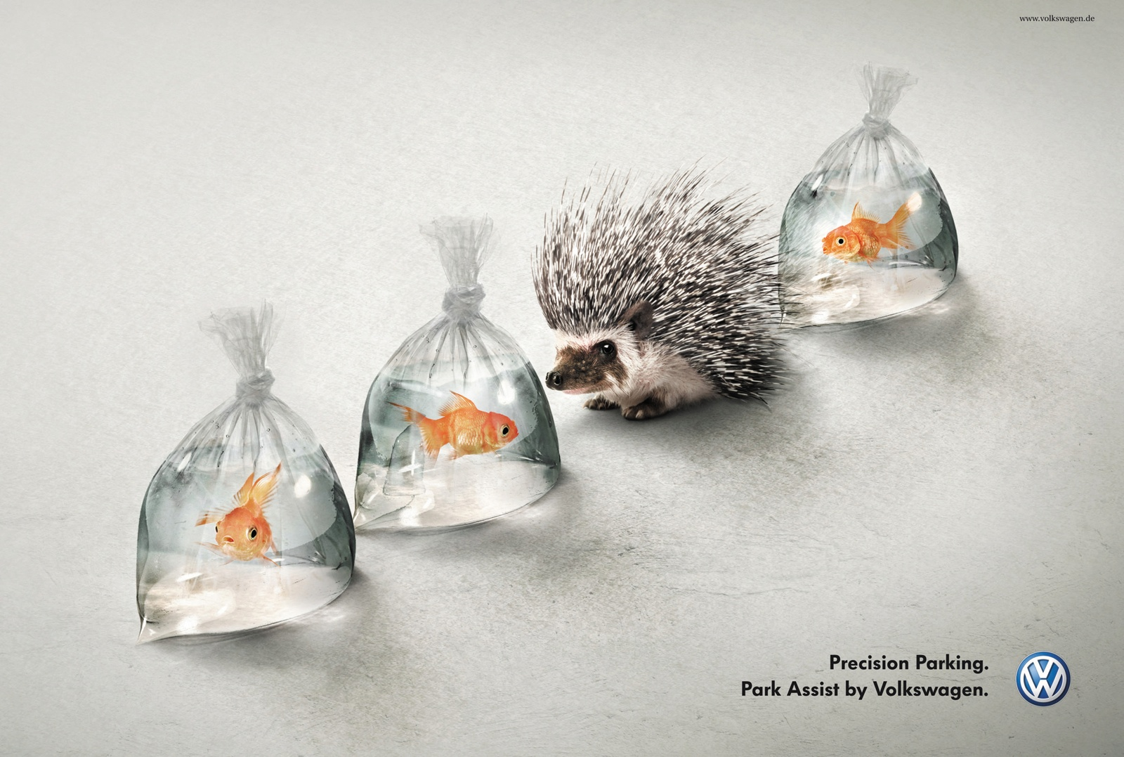 hedgehog_and_fish_aotw